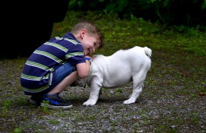 Canine Companio Child
