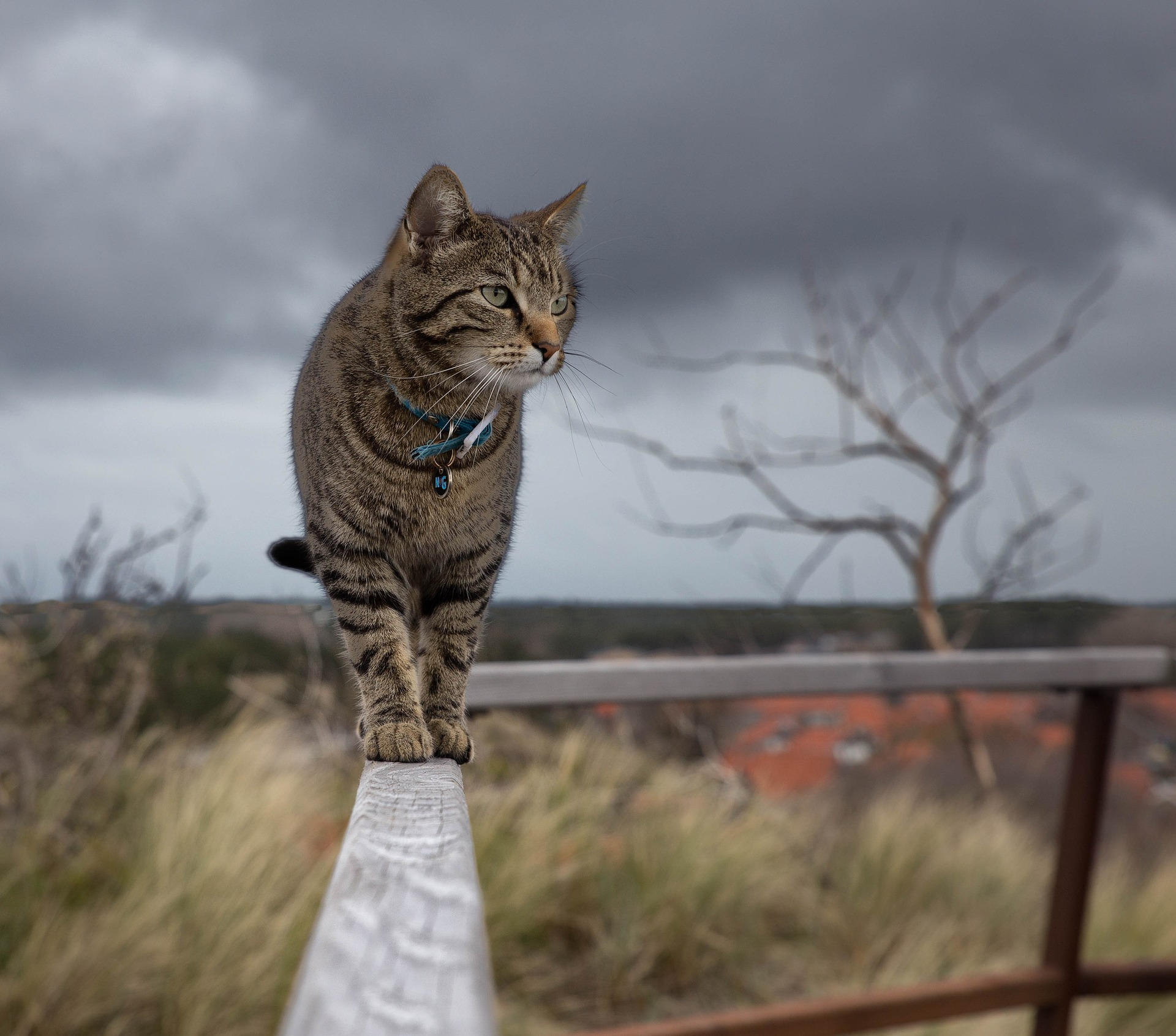 Indoor vs Outdoor: Which is Best for You and Your Cat?