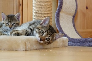 Kitten Training and Socialization