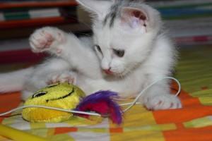 pets toys